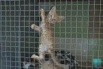 В Бендерском приюте для животных прошёл субботник
