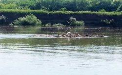 Отдел по делам ГОиЧС города Бендеры рекомендует воздержаться от купания в реке Днестр