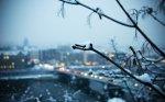 В ближайшие несколько дней синоптики прогнозируют неустойчивый характер погоды