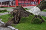 Сегодня на улице Советской упало дерево