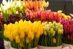 В Бендерах разрешено торговать сезонными живыми цветами в специально отведенных местах
