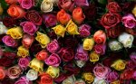 С 1 января торговля живыми цветами вдоль ограды Собора Преображения Господня будет запрещена