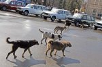 В городе  всё больше бродячих собак