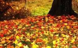 Сжигание осенних листьев опасно и противозаконно