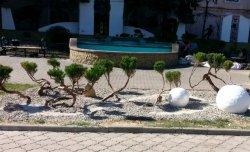 Озеленители создают уникальные ландшафтные композиции на улицах Бендер